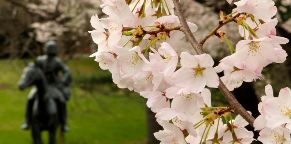 wesley seminary flowers