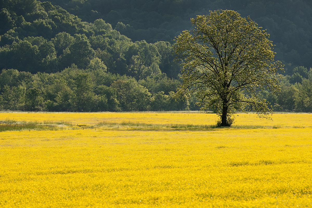 tree greenhouse gases